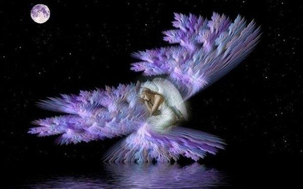 dans fond ecran ange violet 248bf32f