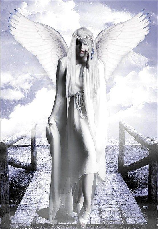 dans fond ecran ange blanc a84d212d