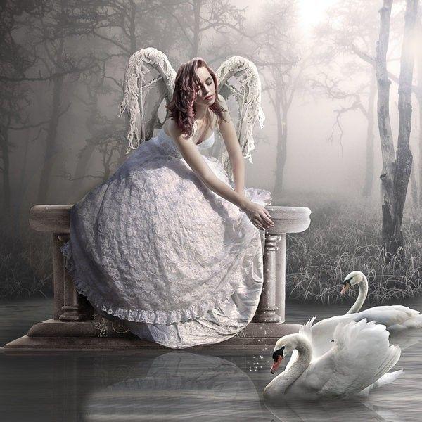 dans fond ecran ange blanc be7bf9f2