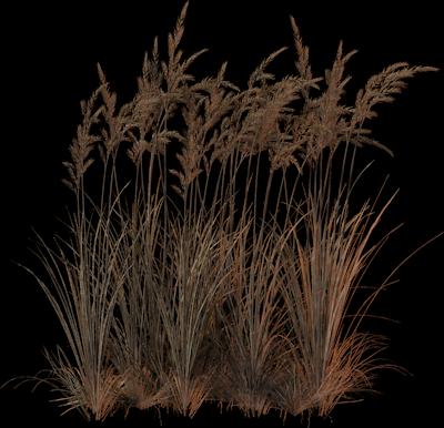 Tb verdure automne for Vegetacion ornamental