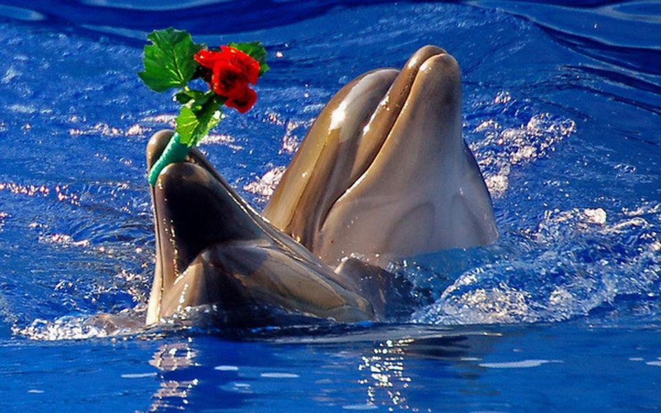 fond d'ecran gratuit dauphin hd